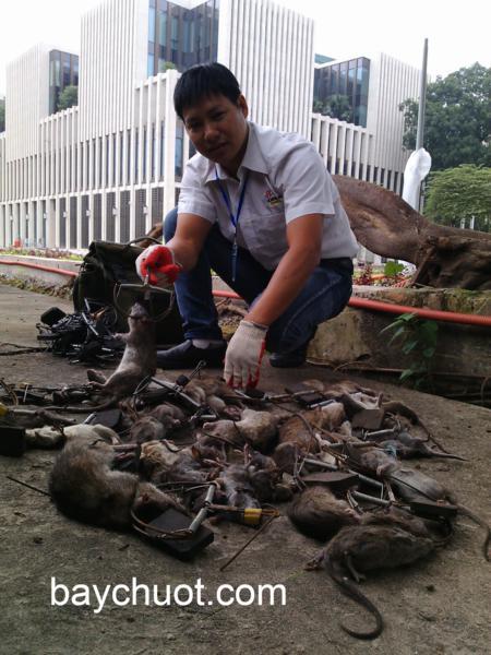 diệt chuột toa nha