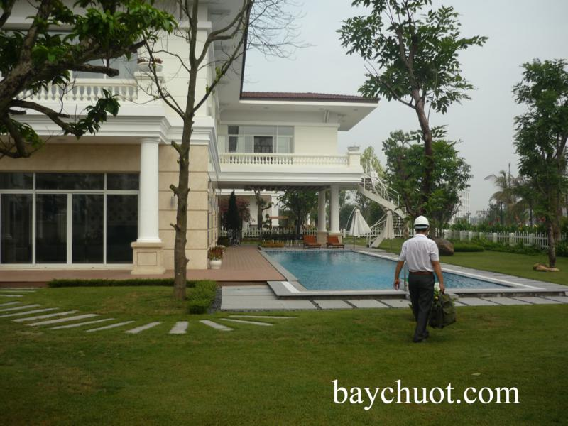 bay chuot